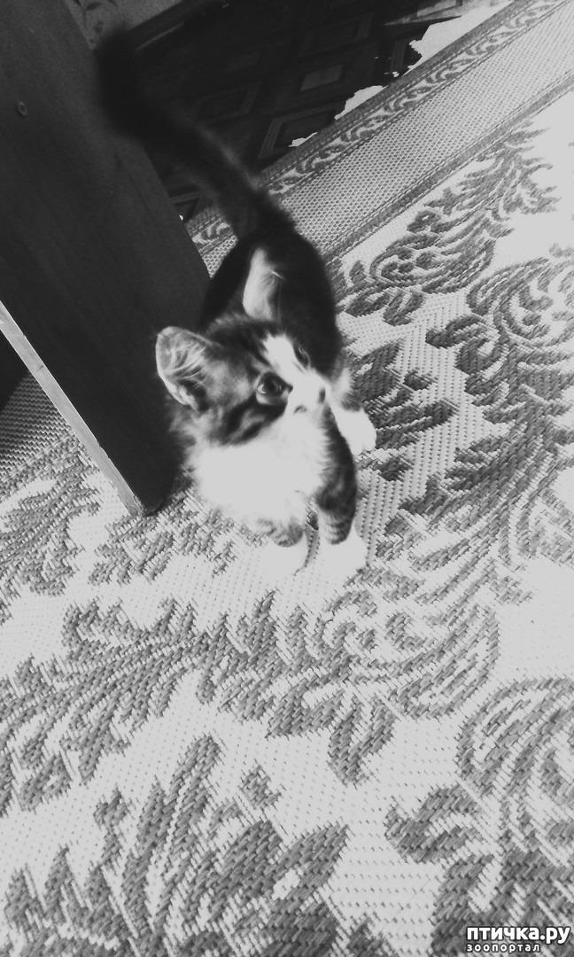 фото 13: КАК Я ПРОВЕЛА ЛЕТО или помощь кошке Снежке