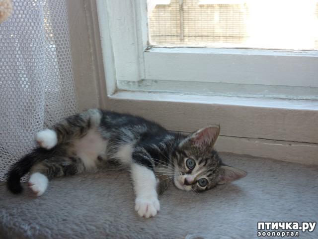 фото 24: КАК Я ПРОВЕЛА ЛЕТО или помощь кошке Снежке