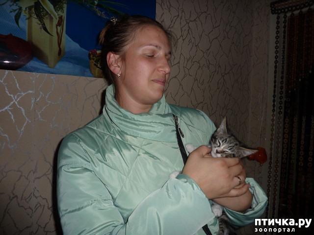 фото 26: КАК Я ПРОВЕЛА ЛЕТО или помощь кошке Снежке