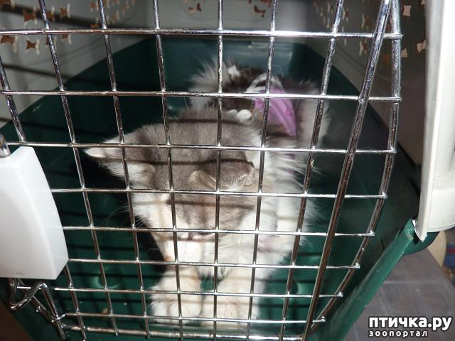 фото 27: КАК Я ПРОВЕЛА ЛЕТО или помощь кошке Снежке
