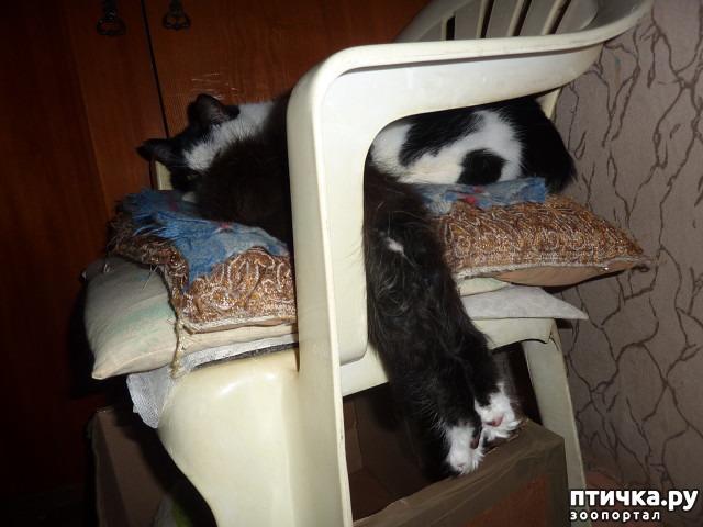 фото 30: КАК Я ПРОВЕЛА ЛЕТО или помощь кошке Снежке
