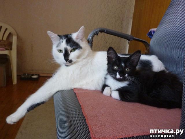 фото 31: КАК Я ПРОВЕЛА ЛЕТО или помощь кошке Снежке