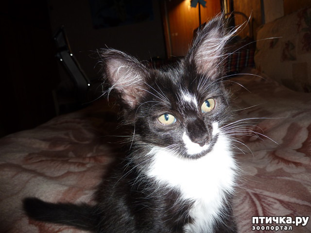 фото 32: КАК Я ПРОВЕЛА ЛЕТО или помощь кошке Снежке