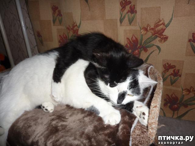 фото 33: КАК Я ПРОВЕЛА ЛЕТО или помощь кошке Снежке