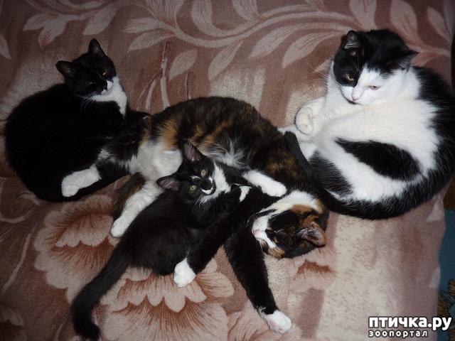 фото 35: КАК Я ПРОВЕЛА ЛЕТО или помощь кошке Снежке