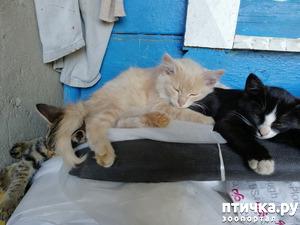 фото: Эпопея с котятами продолжается