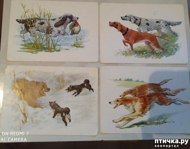 фото 3: Животные на открытках