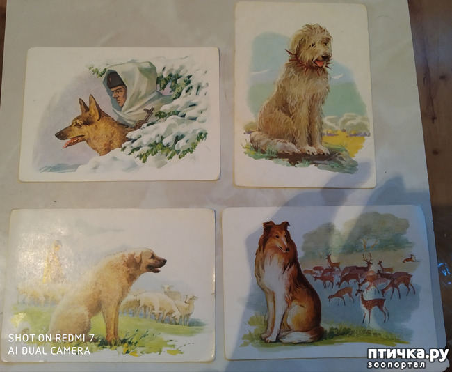 фото 4: Животные на открытках