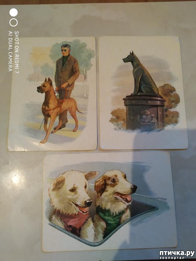 фото 5: Животные на открытках