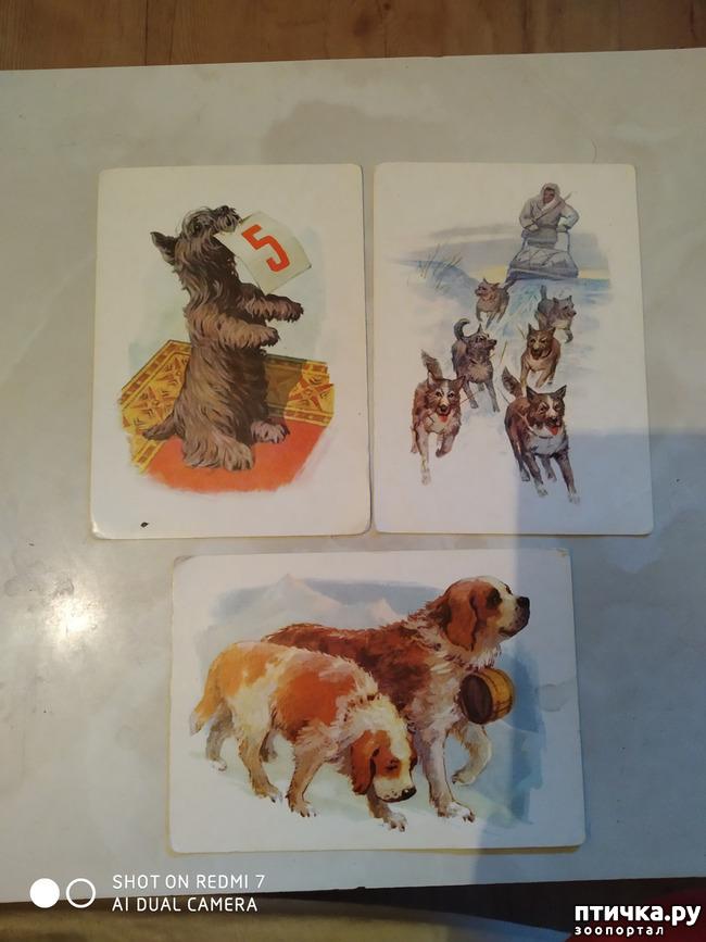 фото 6: Животные на открытках