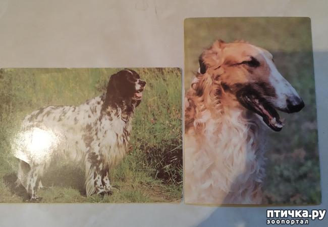 фото 7: Животные на открытках