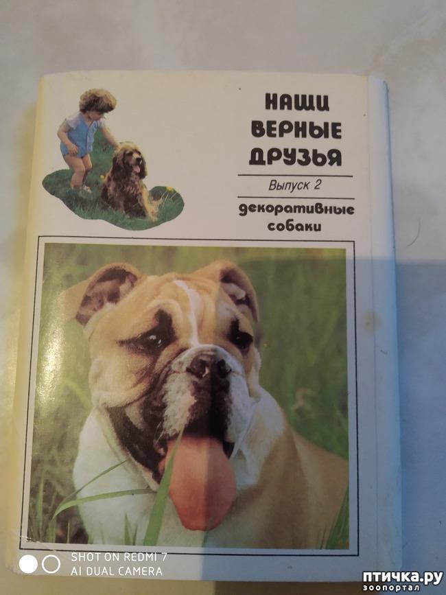 фото 8: Животные на открытках
