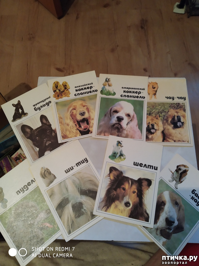 фото 9: Животные на открытках