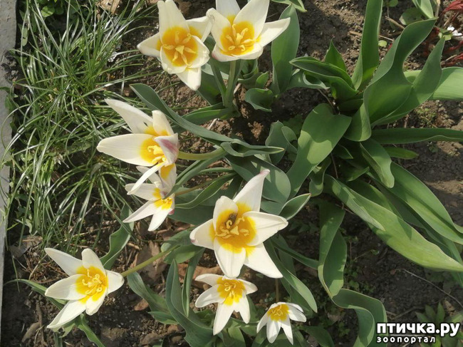 фото 12: Хочу похвастать своими орхидеями.:)