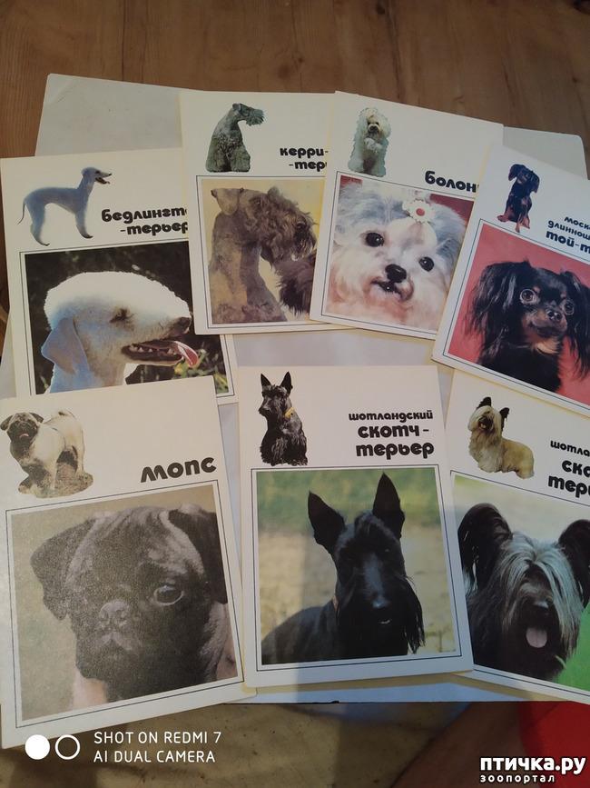 фото 10: Животные на открытках