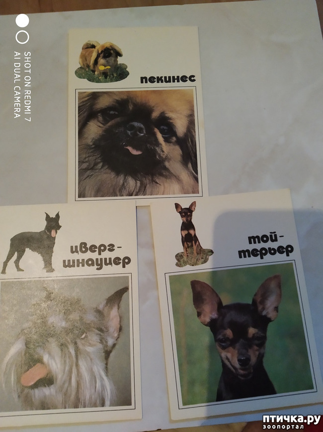 фото 11: Животные на открытках
