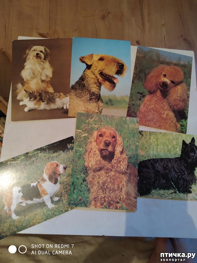 фото 12: Животные на открытках