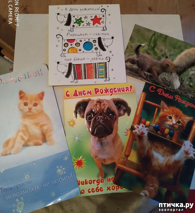 фото 23: Животные на открытках
