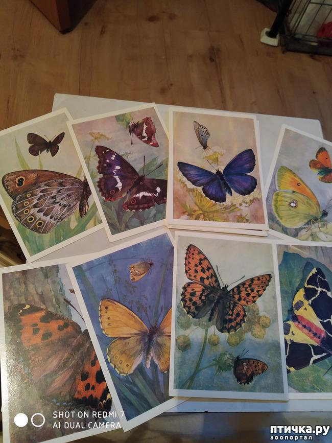 фото 13: Животные на открытках