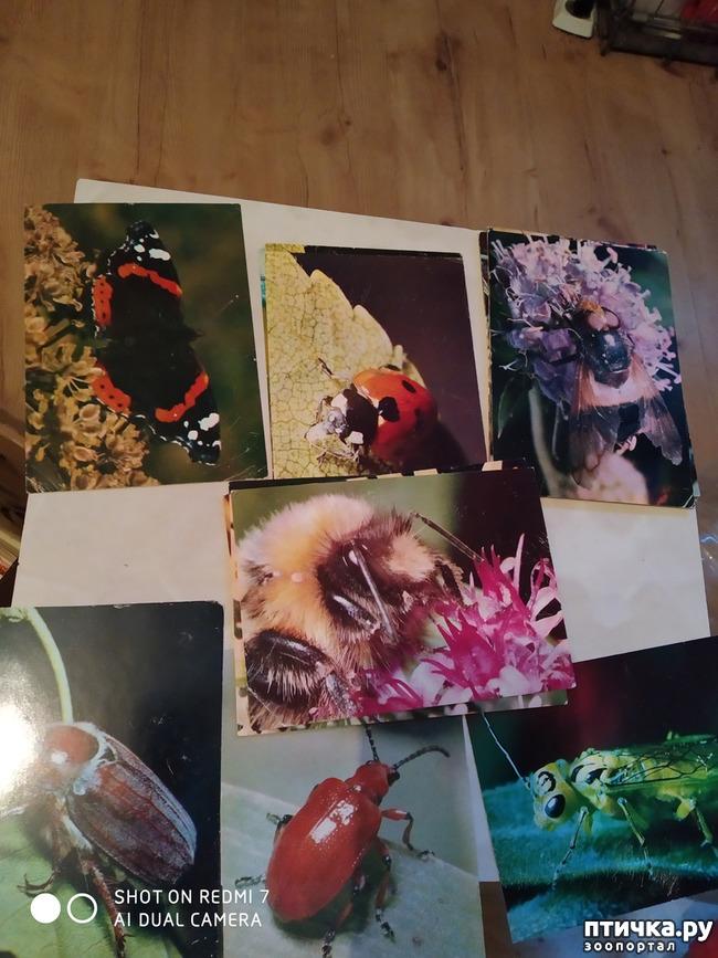 фото 14: Животные на открытках