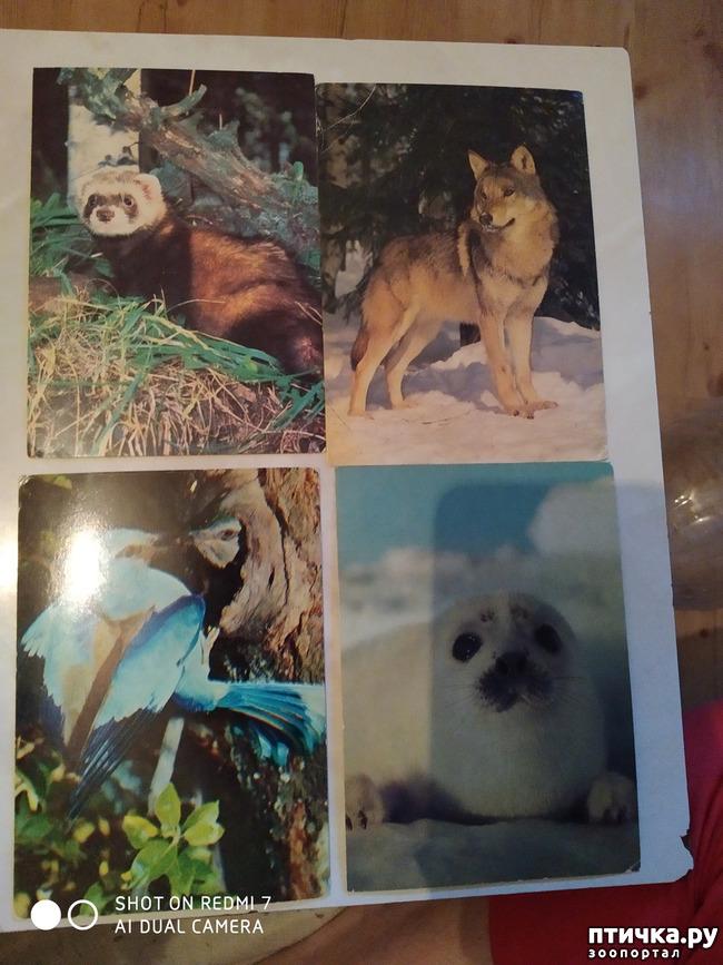 фото 15: Животные на открытках