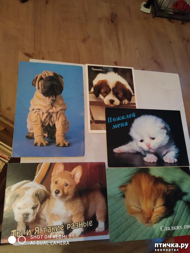 фото 16: Животные на открытках