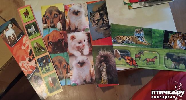 фото 17: Животные на открытках