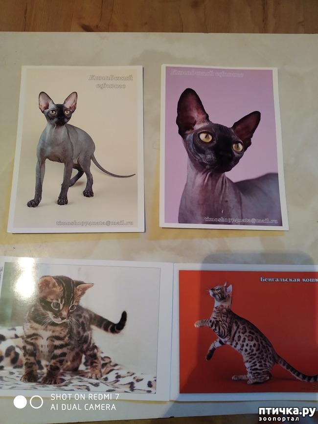 фото 18: Животные на открытках