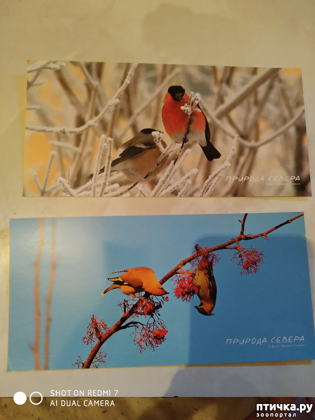 фото 20: Животные на открытках
