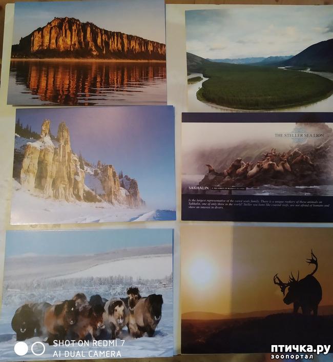 фото 21: Животные на открытках