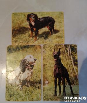фото: Животные на открытках
