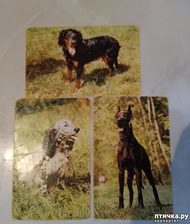 фото 1: Животные на открытках