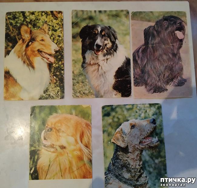 фото 2: Животные на открытках