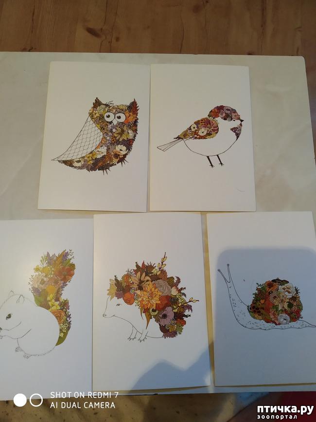 фото 19: Животные на открытках
