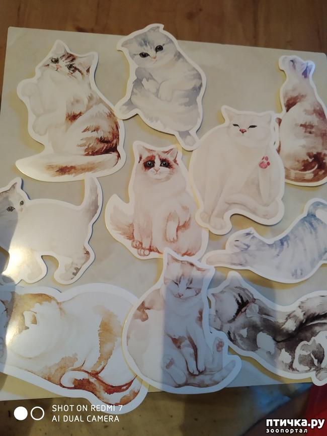 фото 22: Животные на открытках