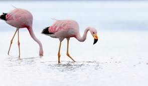 фото 5: Фламинго - птица огня