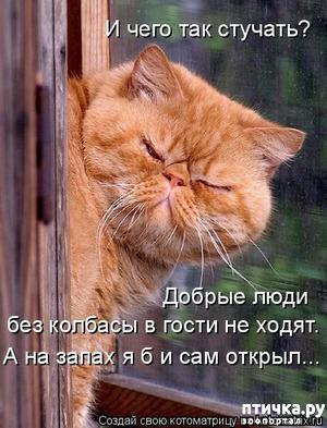 фото: Смешные фотографии кошек
