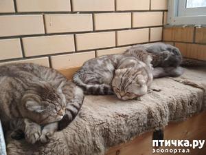 фото: Потеплело, коты заполонили весь балкончик