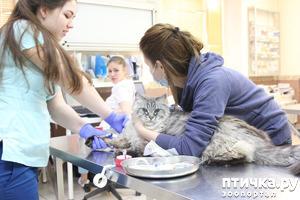 """фото: Бесплатная онлайн-лекция о здоровье кошек от фонда помощи животным """"РЭЙ"""""""