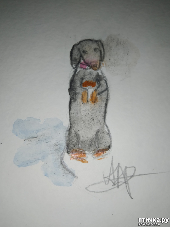 фото 3: Как собаки о нас заботятся