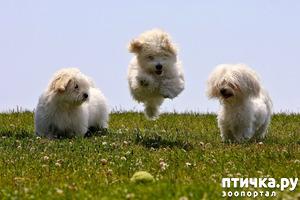 фото: Великолепные тройки!