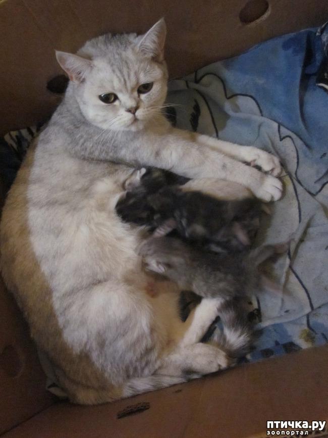 фото 3: Счастливое семейство