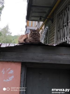 фото: Про кота Степана, нашего соседа