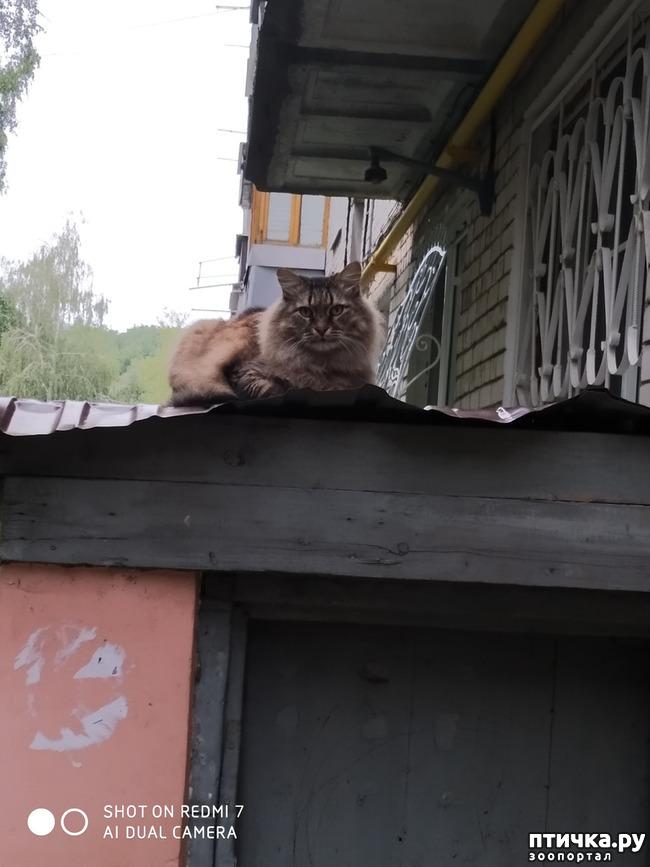 фото 1: Про кота Степана, нашего соседа