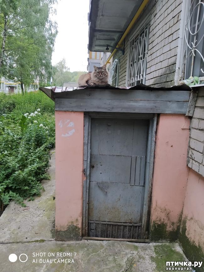фото 3: Про кота Степана, нашего соседа