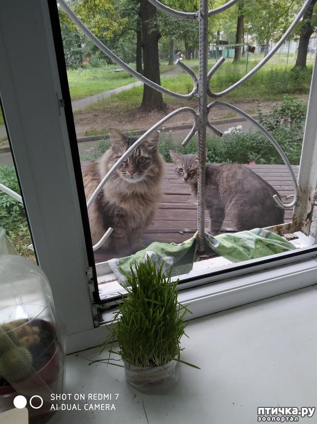 фото 4: Про кота Степана, нашего соседа