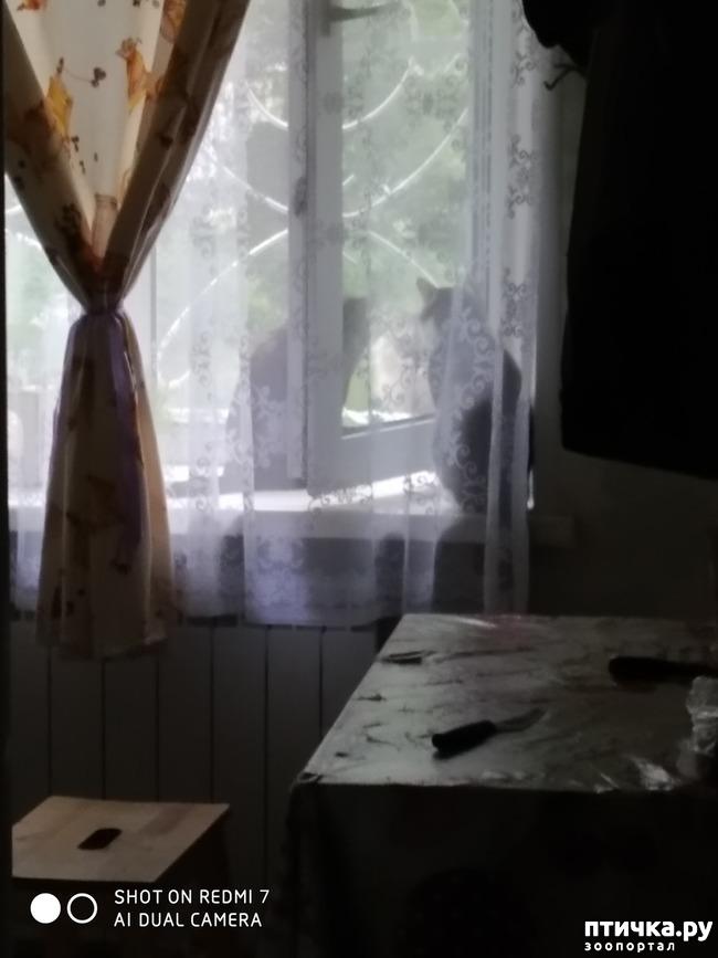 фото 2: Про кота Степана, нашего соседа