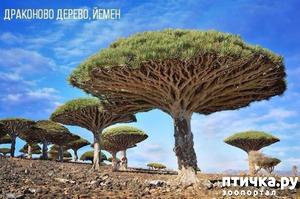 фото: Фантастические деревья, которые растут на нашей планете