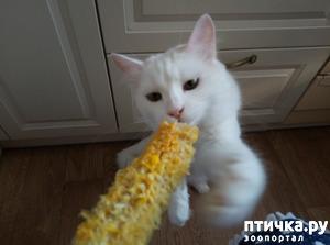 фото: Беляш и кукуруза