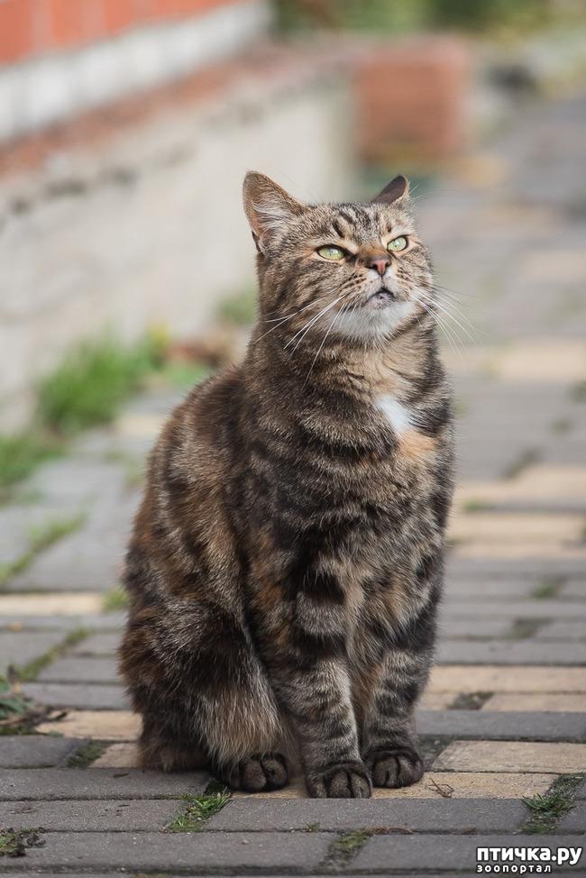 фото 2: Позвольте вам представить кошечку!